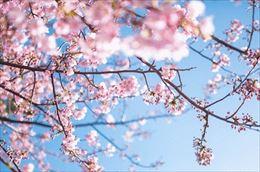 桜が咲き始めました!!